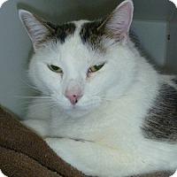 Adopt A Pet :: Spinar - Hamburg, NY