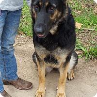 Adopt A Pet :: BELLA - Gustine, CA