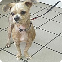 Adopt A Pet :: Tyson - Culver City, CA
