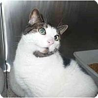 Adopt A Pet :: Trixie - Colmar, PA