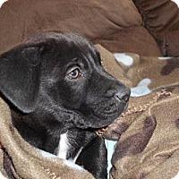 Adopt A Pet :: Buster - Torrance, CA