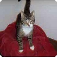 Adopt A Pet :: Hamilton - Hamburg, NY