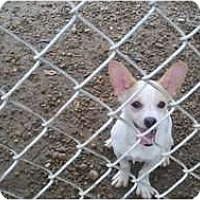 Adopt A Pet :: Cracker - Niceville, FL