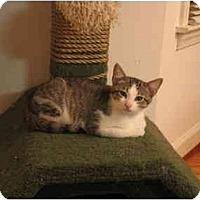 Adopt A Pet :: Taxi - Greenville, SC
