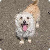 Adopt A Pet :: Annie - Tumwater, WA