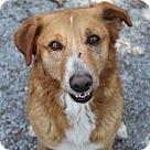 Adopt A Pet :: Lucky Dan