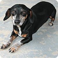 Adopt A Pet :: Gibbs - san antonio, TX