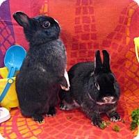 Adopt A Pet :: Amelia - Columbus, OH