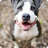 Adopt A Pet :: Brooklyn - New Canaan, CT