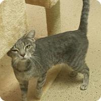Adopt A Pet :: Tatum - Scottsdale, AZ