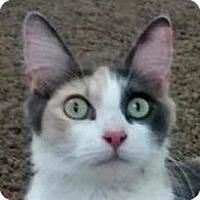 Adopt A Pet :: Fancy - Winchester, CA