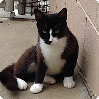 Adopt A Pet :: Suki - Bluefield, WV