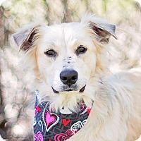 Adopt A Pet :: Prissy - Kingwood, TX