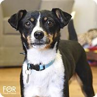 Adopt A Pet :: CJ - Homewood, AL