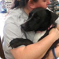Adopt A Pet :: Trinity - Ogden, UT