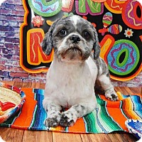 Adopt A Pet :: Mojito Montgomery - Urbana, OH