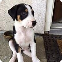 Adopt A Pet :: Morganita - Houston, TX