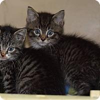 Adopt A Pet :: Fric & Frac - Willington, CT