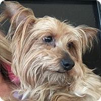 Adopt A Pet :: Ripley - Las Vegas, NV