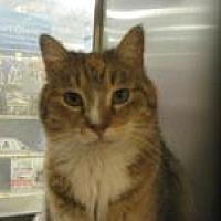 Adopt A Pet :: Scarlett - Logan, UT