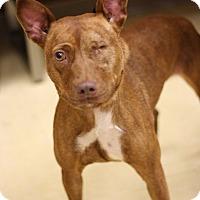 Adopt A Pet :: Dixie - Lyles, TN