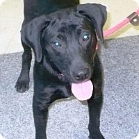 Adopt A Pet :: Bubba - Eastpoint, FL