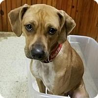 Adopt A Pet :: Cooper - Burbank, OH