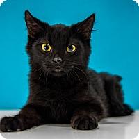 Adopt A Pet :: Clyde - Chandler, AZ