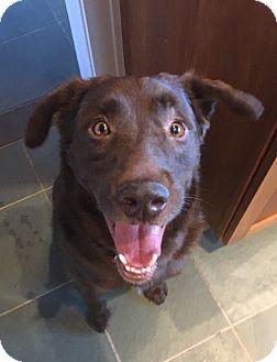 Bedford Hills Dog Rescue