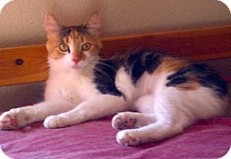 Calico Cat for adoption in Escondido, California - Rita