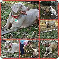 Adopt A Pet :: JADE - Davenport, FL