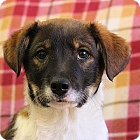 Adopt A Pet :: Zuko - Roosevelt, UT