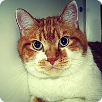 Adopt A Pet :: Rufus - Cheyenne, WY