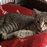 Adopt A Pet :: Zeus - Island Park, NY