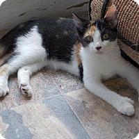 Adopt A Pet :: Calla Lily (Bev's Foster) - Hudson, NY