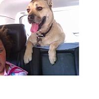 Adopt A Pet :: Jackson - Santa Monica, CA