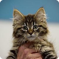 Adopt A Pet :: Francie, Frisco, Frito, Fiona - Fort Wayne, IN