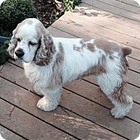 Adopt A Pet :: Sam-ADOPTED!! - Sacramento, CA