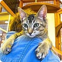 Adopt A Pet :: Pogo - Davis, CA