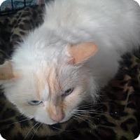Adopt A Pet :: Venus - Columbus, OH