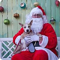 Adopt A Pet :: Kiwi - Atlanta, GA