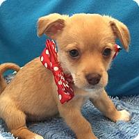 Adopt A Pet :: Alvin - Irvine, CA