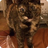 Adopt A Pet :: Lucy - Forest Hills, NY