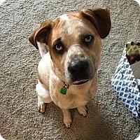 Adopt A Pet :: Deogi (D.O.G.) *Courtesy Post* - New Freedom, PA
