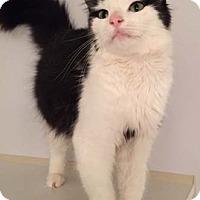 Adopt A Pet :: Jacqueline - Merrifield, VA
