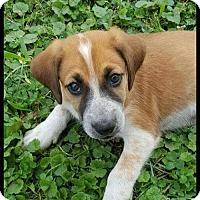 Adopt A Pet :: Kane - Inver Grove, MN