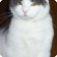 Adopt A Pet :: Merry Golden Eyes - Dallas, TX