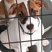 Adopt A Pet :: Rally - Laingsburg, MI