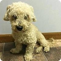 Adopt A Pet :: Manhattan - Bloomington, IL