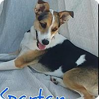 Adopt A Pet :: Spartan - Phoenix, AZ